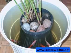 Jak oczyścić wodę w stawie z rybami